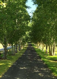 A long, tree-lined driveway? Yes Please. I would love to come home to this everyday. It's so peaceful