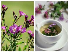 Health, Plants, Pandora, Decor, Medicine, Home, Remedies, Therapy, Decoration