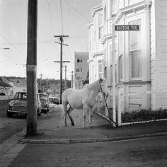 Ans Westra — {Suite} Art Gallery, Wellington, New Zealand New Zealand Art, Kiwiana, Artist Life, Documentary Photography, Street Signs, Auckland, Contemporary Art, Art Photography, Art Gallery