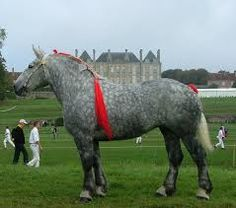 Resultado de imagen de french draft horse boulonnaise-From Wiki-originally bred for war horse, draft work, meat, population declined after WWI and WWII. Although bred mostly for meat in France today, the breed is being helped by those who would use it for agriculture, driving