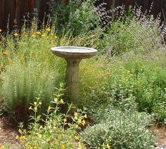 California Native plant garden, including Sticky Monkey, Buckwheat, Salvia and Coyote Mint, surrounding the bird bath.  Wildlife habitat.  Butterfly and bee garden - design featured in the California Native Plant Society's 'Going Native Garden Tour.'