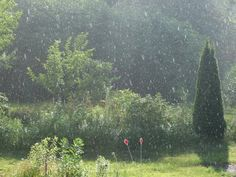 ☼ ☀ ☁ ☂☼ ☀ ☁ ☂☼ ☀ ☁ ☂ SUNSHOWERS FOR YOUR SOUL ☼ ☀ ☁ ☂ ☼ ☀ ☁ ☂☼ ☀ ☁ ☂