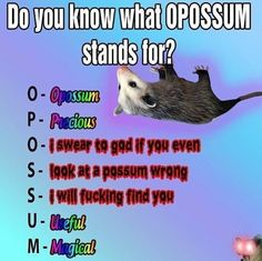 Take this as a warning . Funny Animal Pictures, Funny Animals, Cute Animals, Love And Co, I Am Sad, Opossum, Stupid Memes, Funny Relatable Memes, Haha