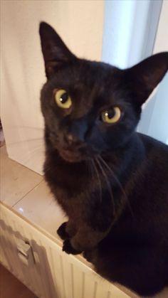 Allen Katze | Pawshake