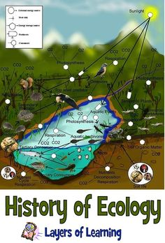 English: A freshwater aquatic and terrestrial food-web. Biology Lessons, Teaching Biology, Science Lessons, Science Activities, Science Projects, Life Science, Science And Nature, Science Ideas, Ap Biology