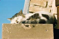 How can I get cat urine smell out of cement? | eHow UK
