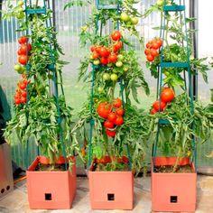 Vegetable Garden - Advice For Making Horticulture More Fun And Fruitful - Simple Backyard Gardening Garden Sink, Balcony Garden, Garden Planters, Rain Garden, Gemüseanbau In Kübeln, Garden Equipment, Container Gardening Vegetables, Vegetable Garden Design, Organic Gardening Tips
