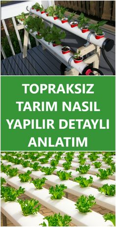 Hydroponic Agriculture Cost- Topraksız Tarım Nasıl Yapılır, Hidroponik Tarım Maliyeti How to do soilless agriculture at home, on the balcony, in the greenhouse? Do it yourself with the most affordable costs! Detailed Lecture from scratch - Herb Garden, Vegetable Garden, Home And Garden, Agriculture, Outdoor Stairs, Design Jardin, Wie Macht Man, Hydroponic Gardening, Mittleider Gardening