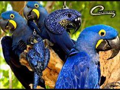 Coleção Joias Carmine - Um novo conceito em joias folheadas -  Joias Aves Brasileiras