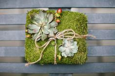 moss and succulent ring pillow au naturel   Photography by zacxwolf.com, Floral Design by roseredandlavender.com