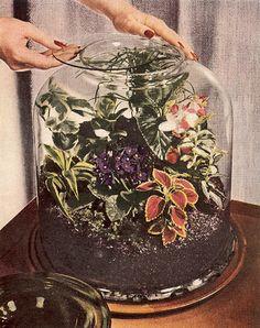 vintage terrarium planting