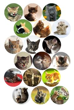 """Kittens Bottle cap image pack  Formatted for printing on 4"""" x 6"""" photo paper"""