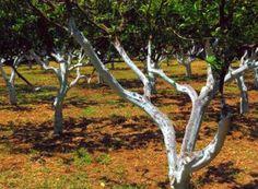 Livadă văruită, în Grecia Salvia, Garden, Greece, Plant, Life, Sage
