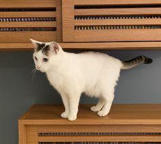 Cats, Animals, Kittens, Gatos, Animales, Animaux, Animal, Cat, Animais