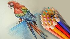 realistic parrot pencil drawing macaw bird draw tutorial drawings sketch easy learn step sketches deer