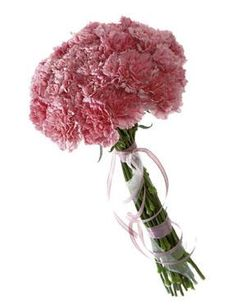 Flowers - Pink Carnations - will be mix of pink and creams in vintage hues