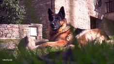 Youtube, Autumn, World, Dogs, Animals, Animales, Fall Season, Animaux, Pet Dogs