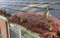 Gutters Full of Debris? We offer a fast and reliable gutter cleaning service 502-644-0006