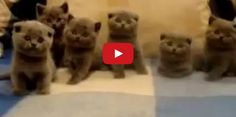 Have You Ever Seen Anything More Adorable Than This? Watch and see!