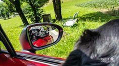 ⚡️Blitzlichter⚡️ Mit Hund und Cabrio in die Sommerfrische