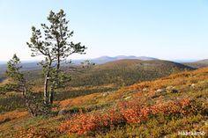 Keimiötunturi, Lapland, Finland www. Elder Scrolls V Skyrim, Lapland Finland, Natural Beauty, Scandinavian, Travelling, Empire, Hiking, Country Roads, Europe
