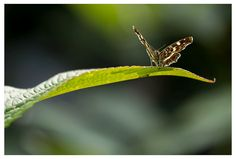 #Butterflies in the garden.
