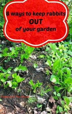 8 Tips To Keep Rabbits Out Of Your Garden