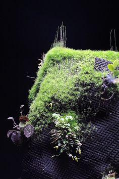 Hygrolon stump | Flickr - Photo Sharing!