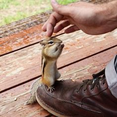 Friendship - Chipmunk and Human