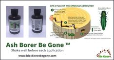 Ash Borer Be Gone ™ Safely promotes healing of the whole tree from the Ash Borer. All organic plant ingredients. 120 ml 4 oz.   Price: - $79.80. #blackknotdisease #blackknotfungus #blackknot #blackknotbegone #cankersonfruittrees #bacterialcankertreatment #fruitrottreatment #blackrottreatment #blackknotfungusspray #leafblight #leafblighttreatment #blackknotfungusspray #applerust #cedarapplerust Ash Borer, Thing 1, Organic Plants, Life Cycles, Cavities, Fungi, Promotion, Healing