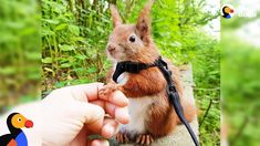 Squirrel Who Falls From Roof Finds Dad Who Won't Give Up on Him - TINTIN...