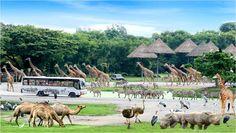 Viajas en familia? Tenemos el día perfecto preparado: un día de safari en Bangkok! Visita majatoursthailand.com para más 🐘🐅 #majatours #tailandia #tailandiaenespañol #bangkok #safariworld #safari #aventura #familia #vacaciones