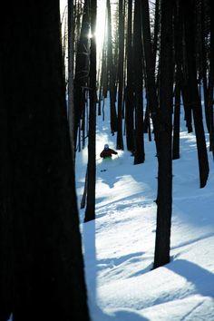 Tree Skiing #ski #pingpal