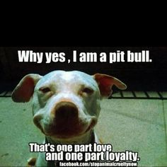Why yes, I am a Pit Bull.
