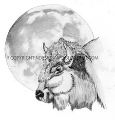 Bison+drawings | ndesign-art: Bison