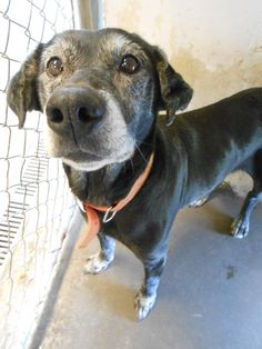 My name is Maddie and I came to the shelter as a stray in November 2013. I am a 10+ year old female. I came in with 2 other dogs...someone very mean dumped us off on a back road and left. Luckily, a very nice man found us and call the shelter. After...