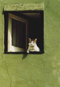 Did I mention I also collect photos of cats? Crazy Cat Lady, Crazy Cats, Animals And Pets, Cute Animals, Animals Images, Animal Gato, Cat Window, Open Window, Image Chat