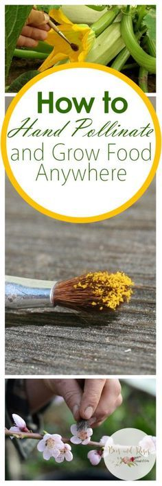 How to Hand Pollinate and Grow Food Anywhere  Hand Pollination, How to Hand Pollinate, Hand Pollination for Beginners, Gardening, Gardening Tips and Tricks, Gardening Hacks, How to Grow Fruit Indoors