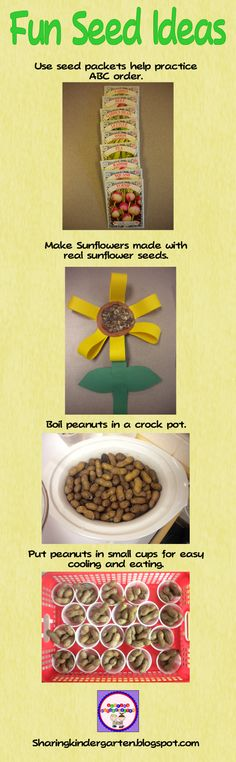 Sharing Kindergarten: Fun Seed Ideas-Like the sunflower seeds in the sunflower craft