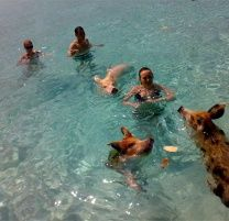 Stumbled upon this gem whilst browsing the Bahamas Tourist Board site... yes, it's people swimming with pigs. PIGS! I could be tempted if it included the trip to paradise...