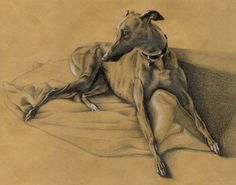 """""""Essie in Pencil"""" - colored pencil on brown paper Greyhound Art, Italian Greyhound, Greyhound Pictures, Lurcher, Bellini, Brown Paper, Whippet, Beautiful Dogs, Dog Art"""
