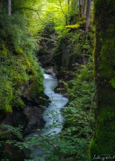 Zauberwald - The trail from Ramsau to the Lake Hintersee, known as the Malerweg, leads through the mythical Forest Zauberwald. We are overwhelmed by the beauty of nature walking along the stream Ramsauer Ache with it's falls and canyons.