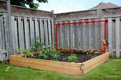 DIY raised vegetable garden bed with red trellis