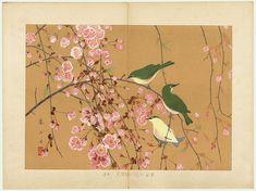 japanese woodblock print, cherry blossoms  #cherryblossom #sakura