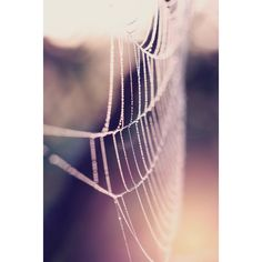 Spider Web Photography, Macro Nature Photo Print, Purple and Pink Tone... ($20) ❤ liked on Polyvore featuring home, home decor, wall art, pink home decor, purple home decor, vertical wall art, pink wall art and pink flamingo wall art