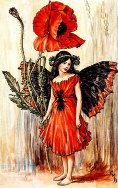 CMB--The Poppy Fairy