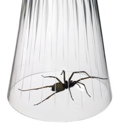 This is a guide about getting rid of spiders. Many people wish to get rid of spiders and remove them from their home, basement, attic, garage and yard. Here are pest control tips for removing arachnids from your living space.
