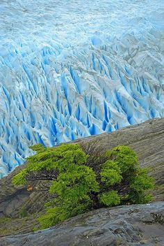 Icebergs & Glaciers National Park | Patagonia