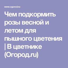 Чем подкормить розы весной и летом для пышного цветения   В цветнике (Огород.ru)