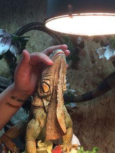 Heerlijke iguana